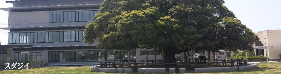 スタダジイの木